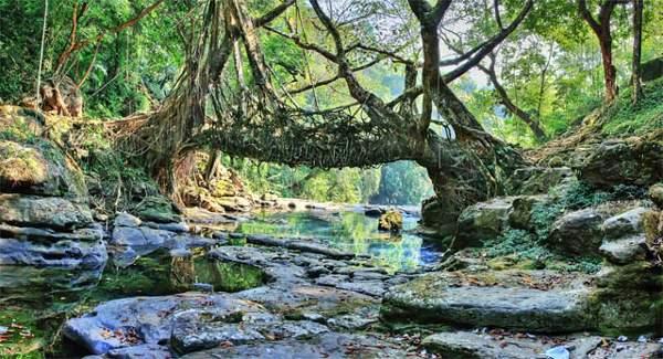 Mawlynnong Living Root Bridge in Meghalaya
