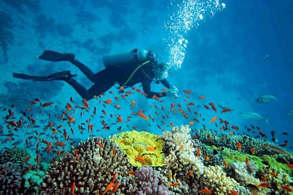 Scuba Diving in Havelock Island, Andaman