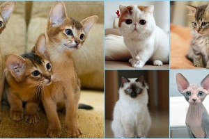 13 most Friendliest cat breeds in the world