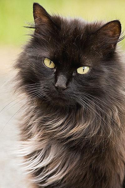 13 Most Friendliest Cat Breeds In The World