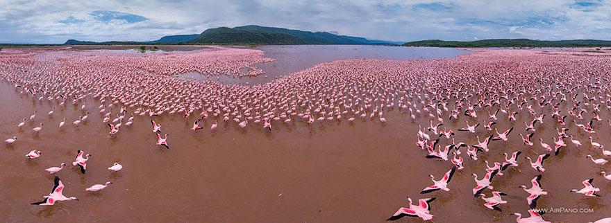 Flamingo, Lake Bogoria, Kenya