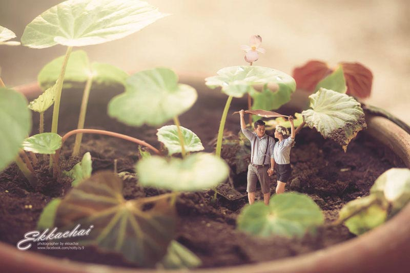 miniature-wedding-photography-ekkachai-saelow-15