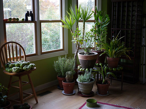 refreshing-indoor-plants