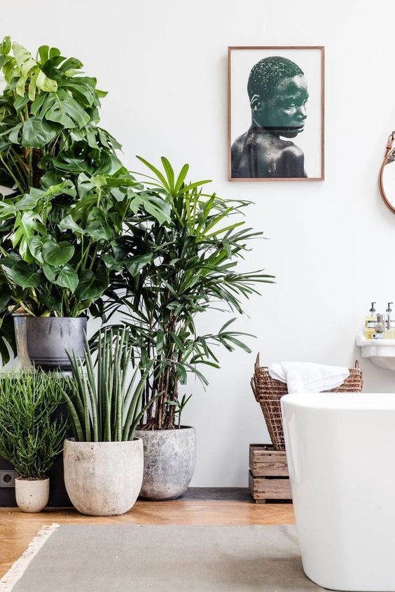 indoor plants for living room