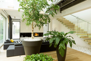 Go Green Simple Ways to Turn-Your-Living-Room intoa Minimalist Paradise