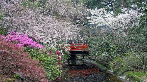 A Stroll in Descanso Gardens