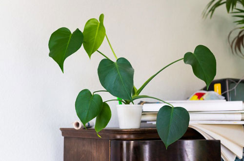 Cultivate Greenery Create An Eco-Savvy Home