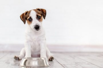 10 Tips For Bringing Your Pups Energy Levels Up