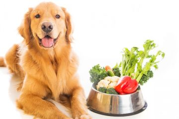 6 Simple Ways to Keep Your Dog's Skin Healthy