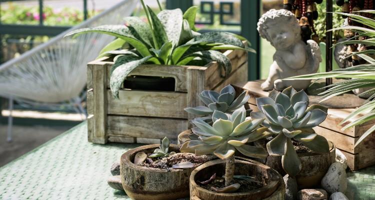 4 Ingenious Garden Ideas for Indoor and Outdoor Spaces