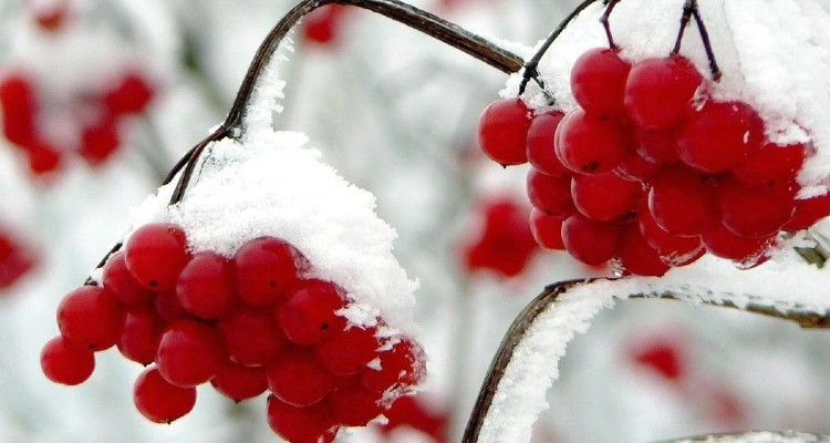 Seven Fruity Tips for Staying Healthy Over the Winter